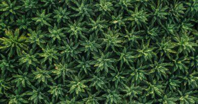 Innocan Pharma Announces Patent Application for Novel Cannabis-Based Anti-Itch Treatment